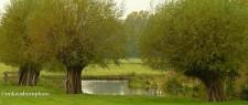 Stour trees