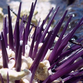 Washed-up anemone