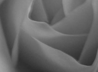Rose Six
