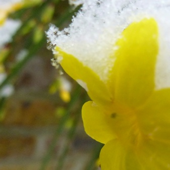 Snow-capped yellow
