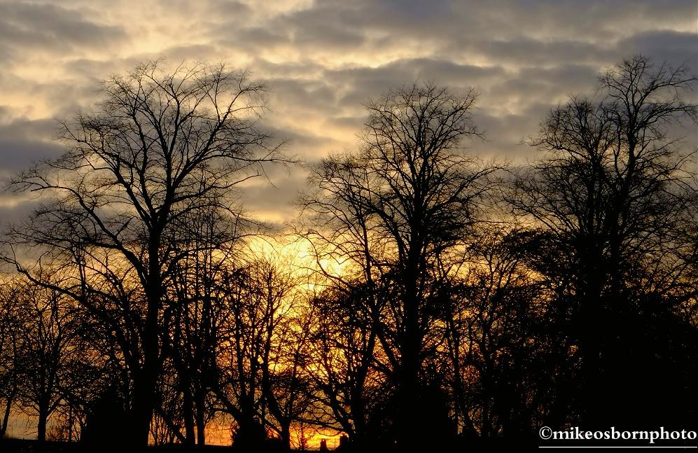 Tree skyscape