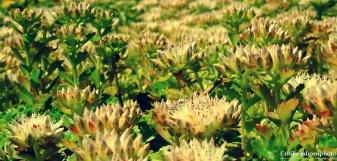 Succulent little forest
