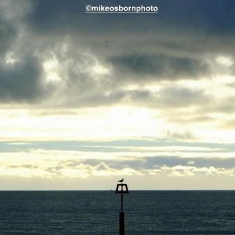 Seagull horizon