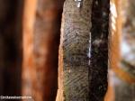 Wooden troika
