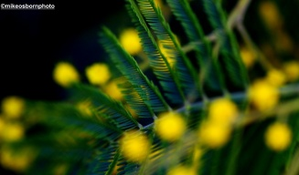 Green on yellow