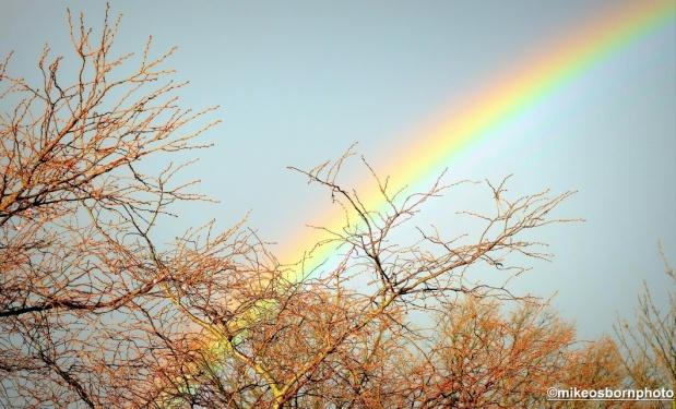 Rainbow over Ravenscourt