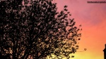 Magenta branches