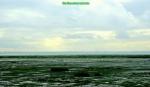 Estuary green