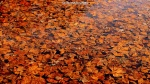 Drowned autumn
