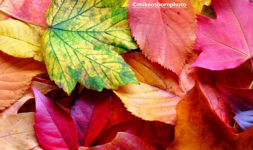 Autumn pile