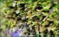 Close-up of rain-soaked vegetation, New Zealand