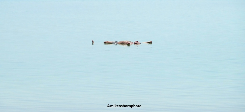 Man floating in the Dead Sea