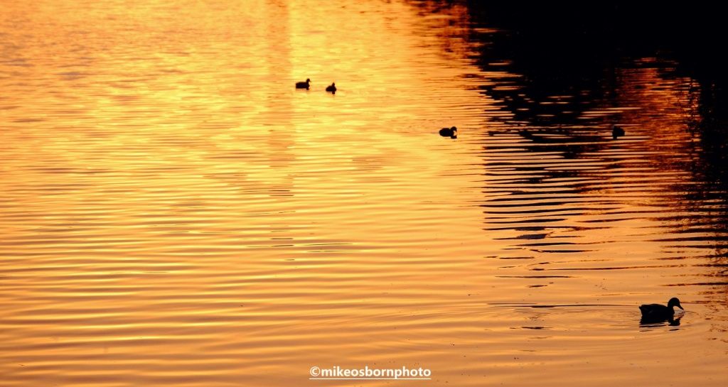 Bridgewater Canal, Salford made golden by sunset