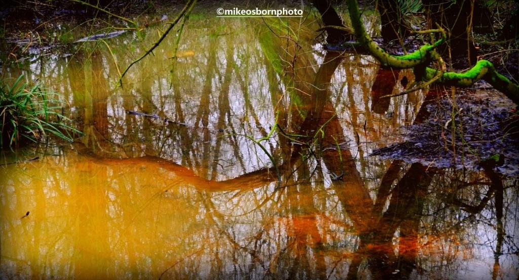 Wet woodland reflections at Fletcher Moss park, Didsbury, Manchester