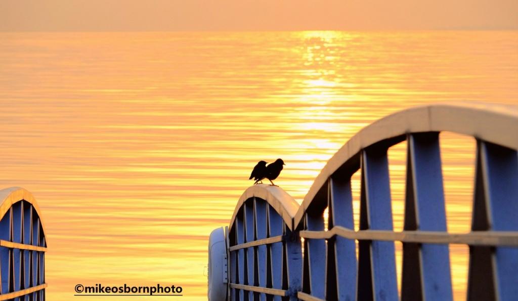 Pair of birds at sunrise