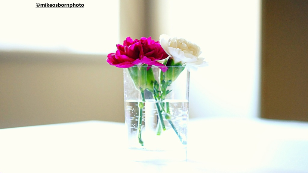 Still life of carnation stems
