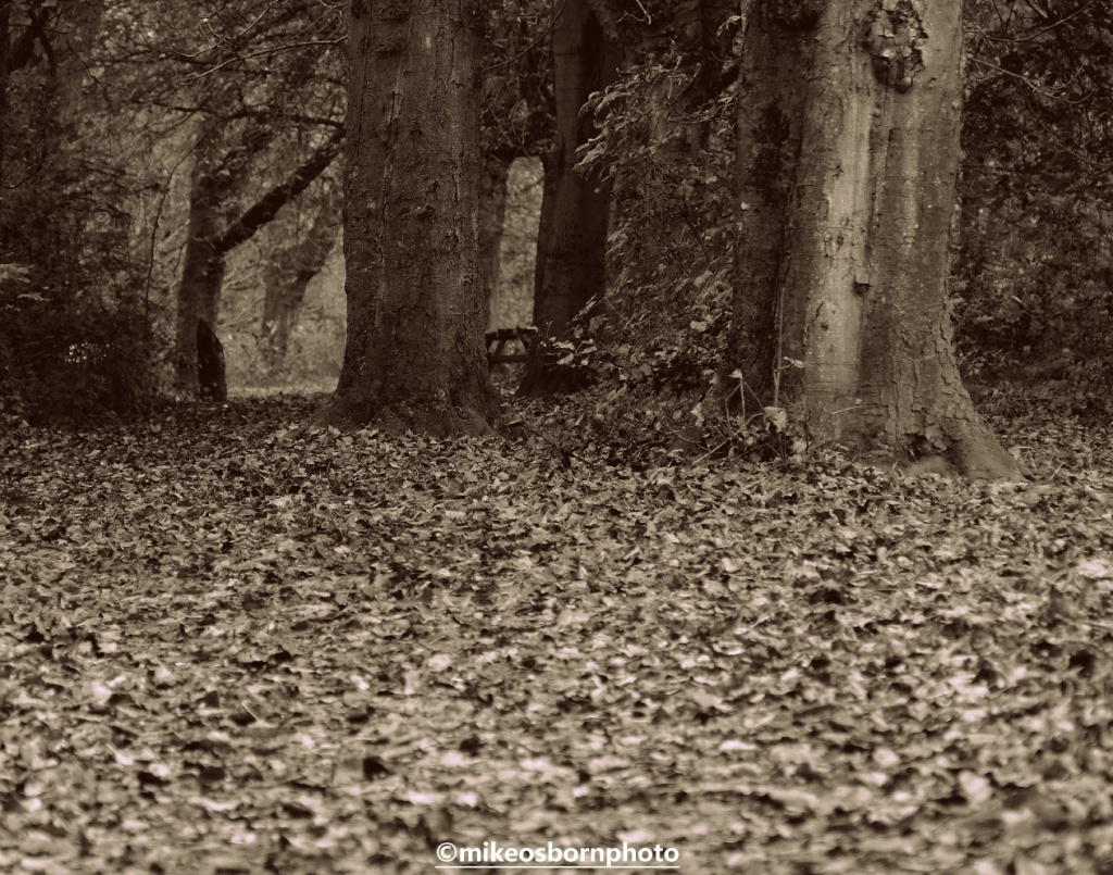 A carpet of autumn leaves at woodland near Didsbury in Manchester
