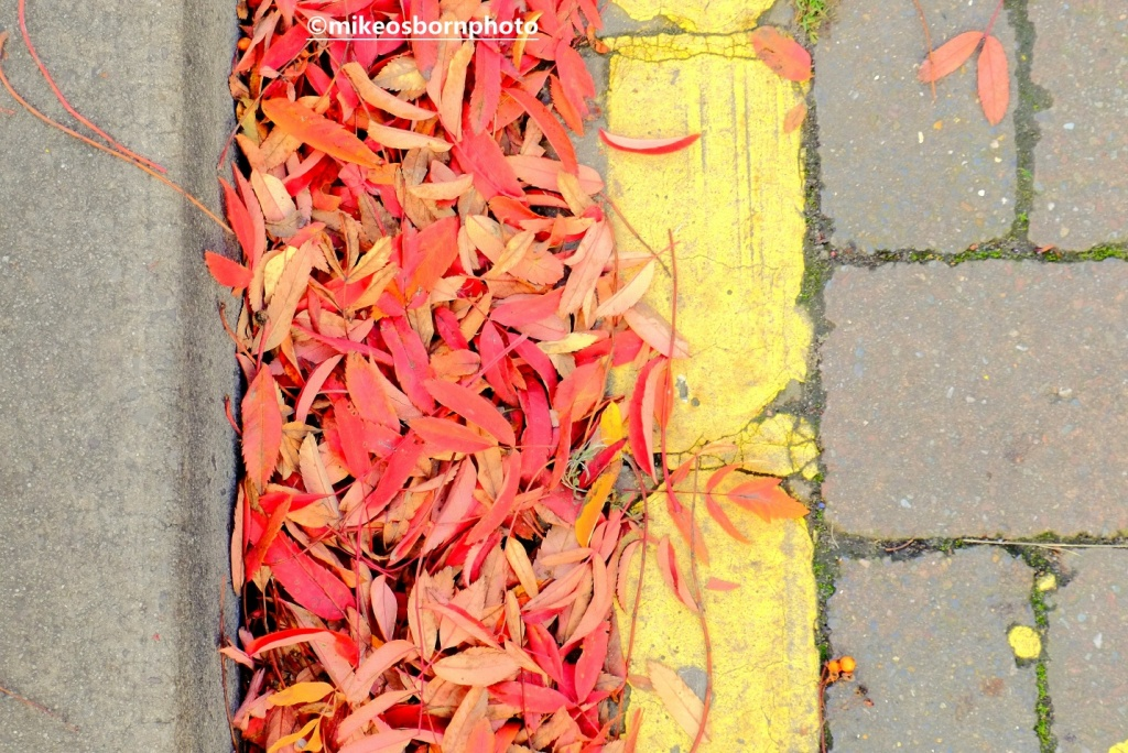 Fallen leaves next to a yellow parking line