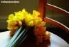 A spray of Daffodils