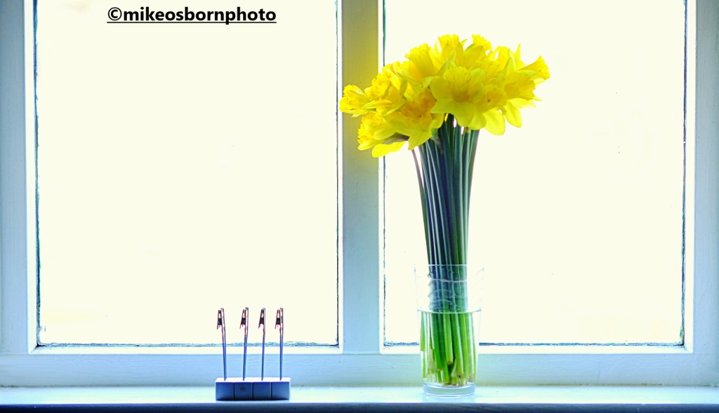 A vase of Daffodils in a window