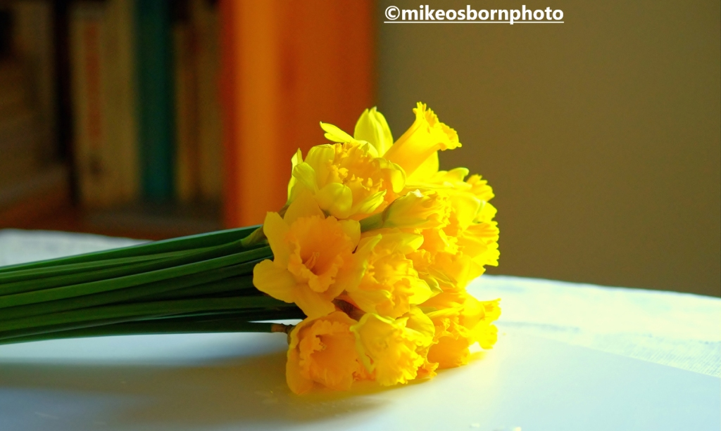A bunch of Daffodils laying on a table