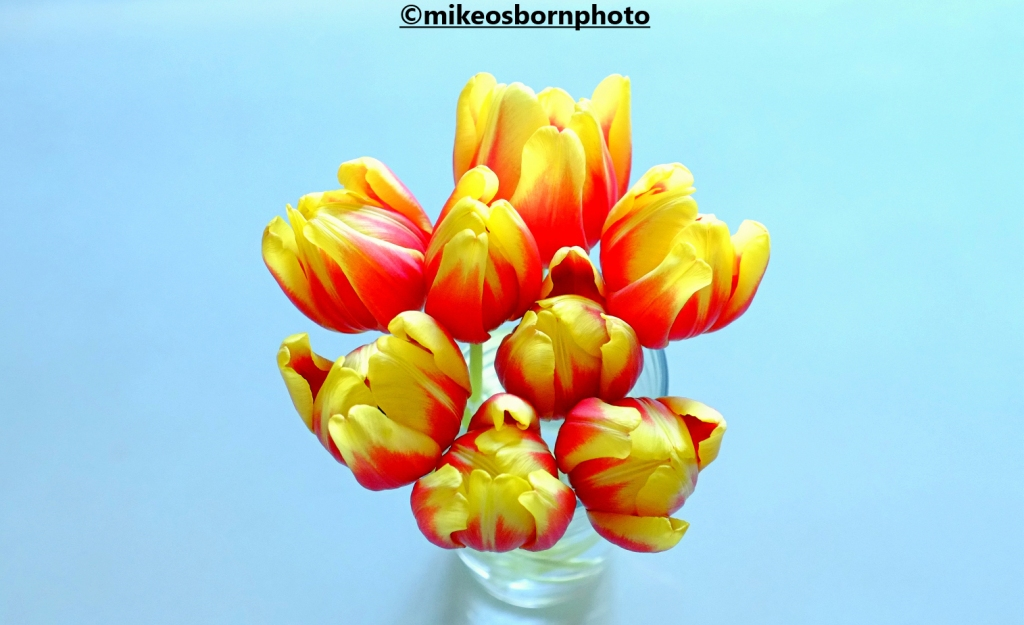 Bright vase of red and yellow tulips