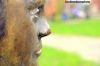State of Alan Turing, Sackville Gardens, Manchester