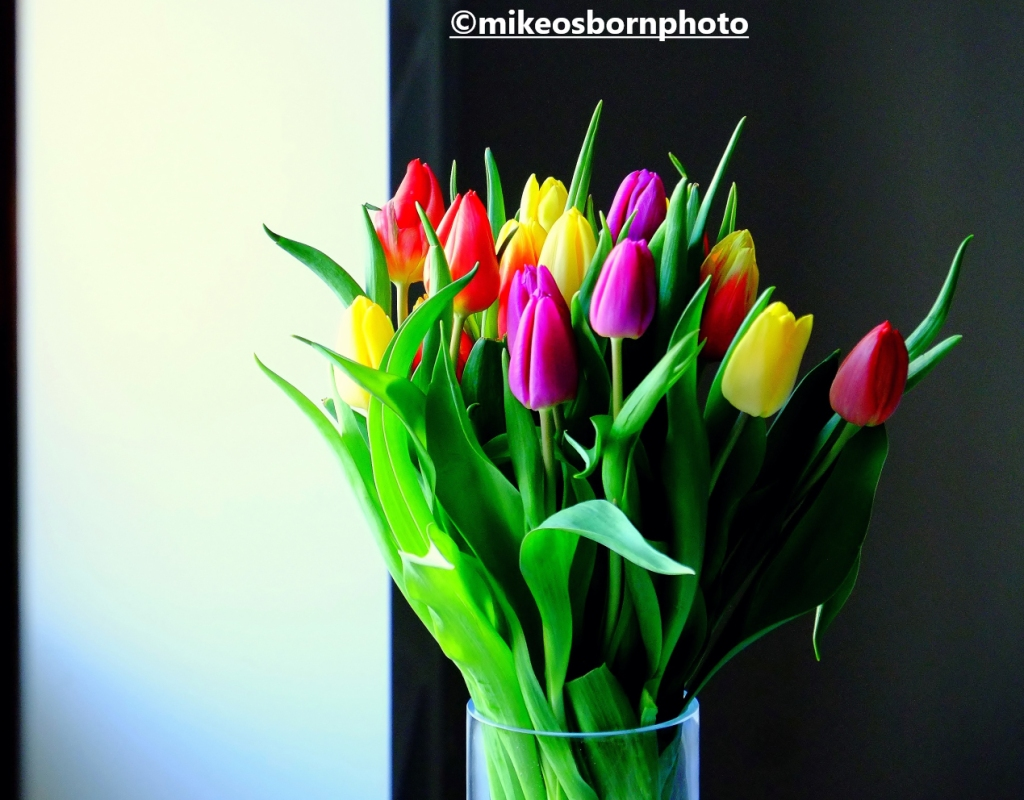 A bouquet of rainbow tulips