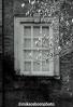 Window magnolia