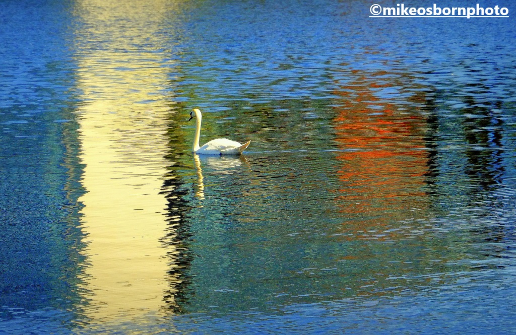 A lone swan and reflections in the Manchester Ship Canal