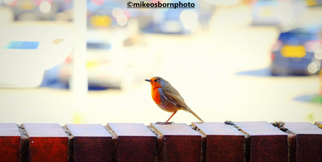 Robin next to a car park in Manchester city centre