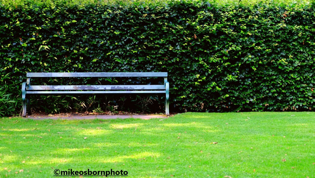 A bench by a hedge at Walkden Gardens, Manchester